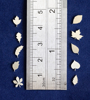 Picture of 925 Sterling Silver Leaves Solderable Accent (set of 10 pc) - 24ga